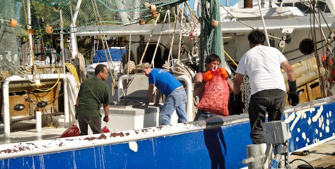 Unloading Shrimp