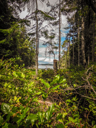 Hike to Conover Cove-10