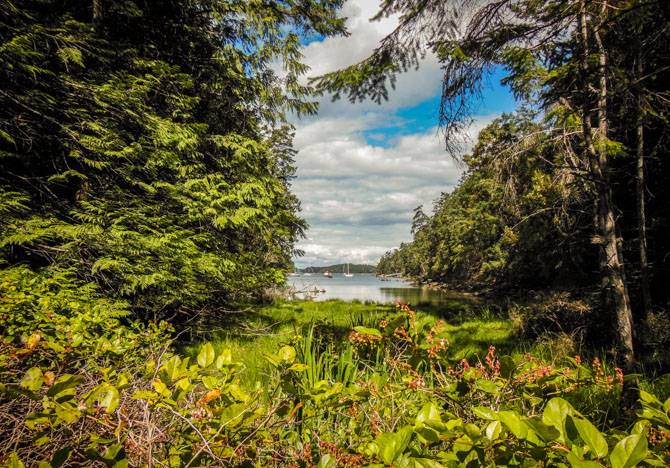 Hike to Conover Cove-9