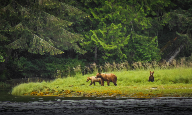 Grizzly Encounter At Brem Bay – BC, Canada