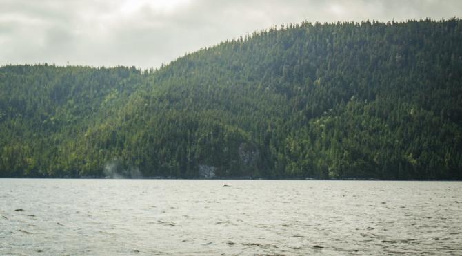 Kwatsi Bay Anchor